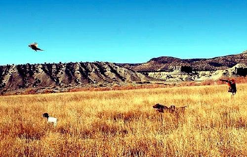 httpswww.outdoorlife.comsitesoutdoorlife.comfilesimport2014importImage2009photo72._Colorado.jpg