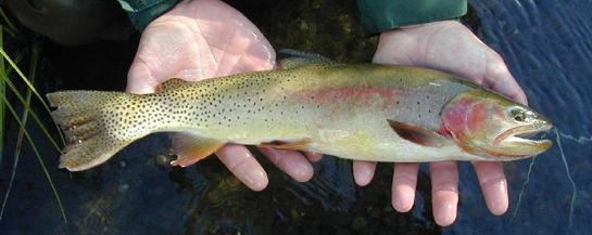 Power Outage Kills 150,000 Hatchery Trout in Wyoming