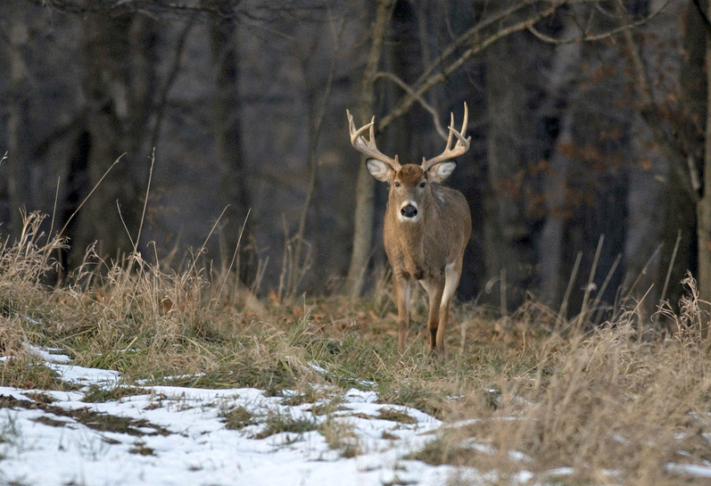 The Benefits of Leasing Deer Hunting Land