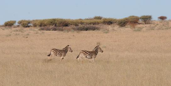 httpswww.outdoorlife.comsitesoutdoorlife.comfilesimport2014importBlogPostembedAfricaMcKean2.jpg