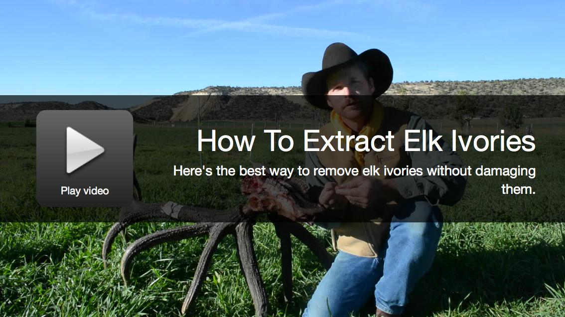 Video: How To Extract Elk Ivories