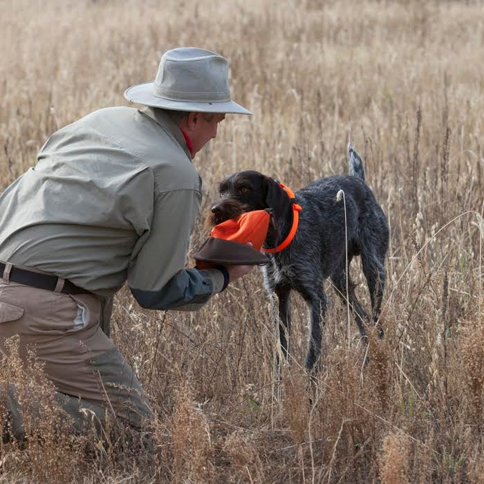 The 5 Ways You're Ruining Your Hunting Dog