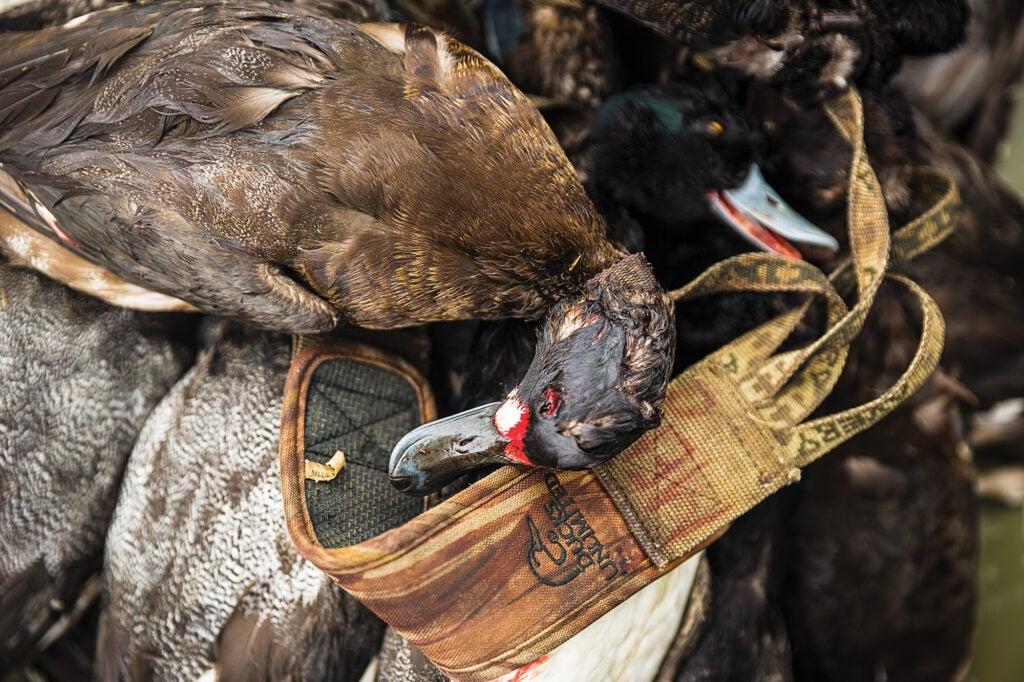 Hunting ducks in Louisiana