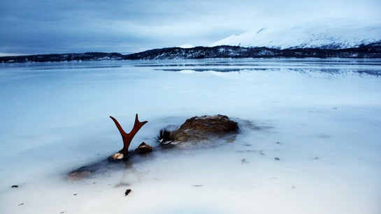 httpswww.outdoorlife.comsitesoutdoorlife.comfilesimport2014importBlogPostembedelk-in-ice-norway-2014.jpg