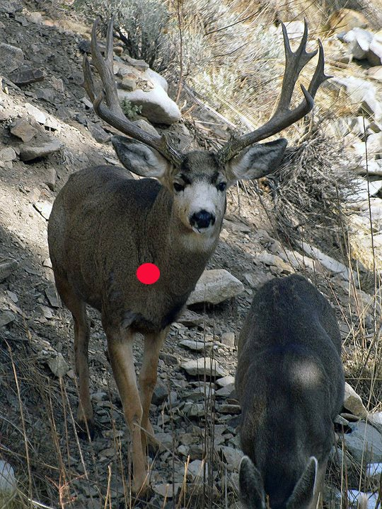 Bowhunting: Frontal Shot Placement