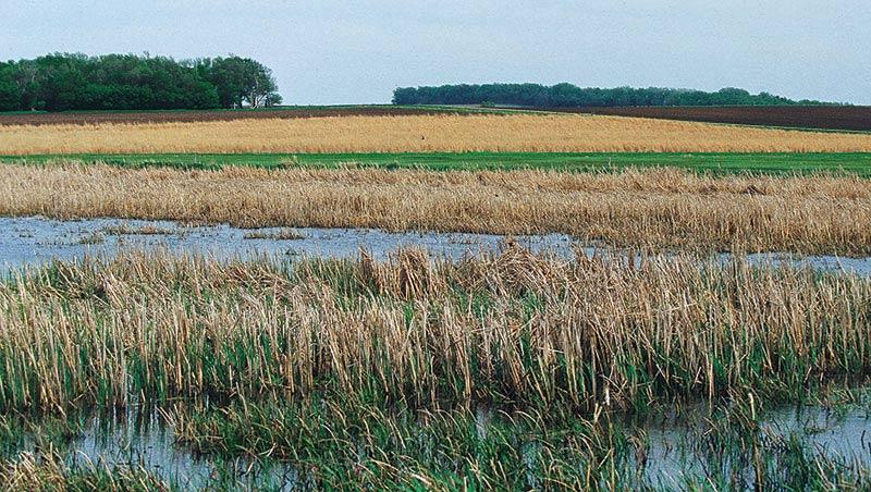 south dakota wetlands