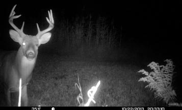 Whitetail Deer: Analyzing a Trail Camera Photo