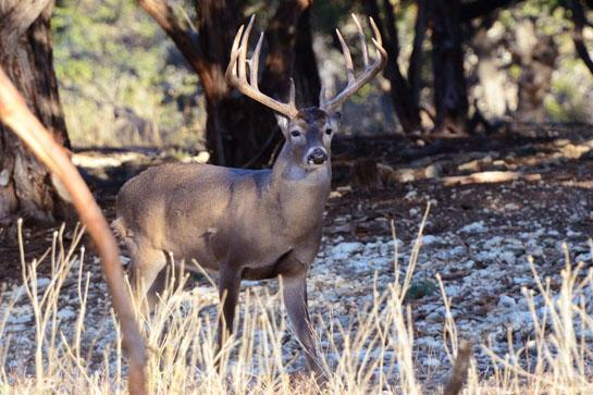 """Addressing Readers' Comments on """"The New Whitetail Scale"""""""