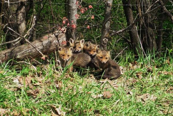 httpswww.outdoorlife.comsitesoutdoorlife.comfilesimport2014importImage2010photo6IMG_0687.jpg