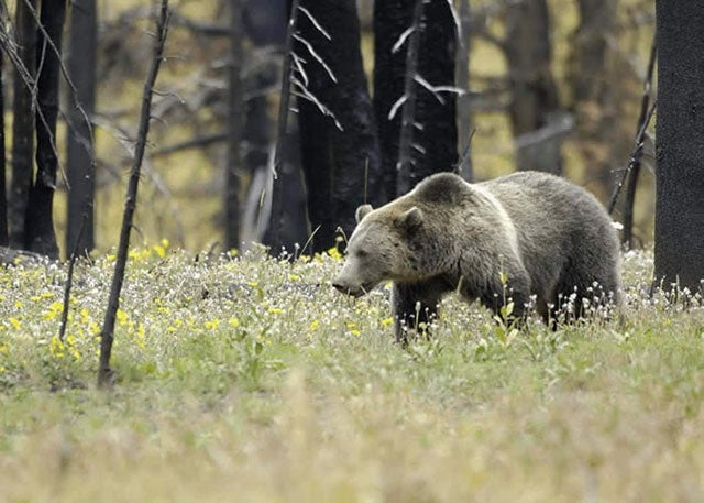 How Social Media Helped Take Down British Columbia's Grizzly Hunt