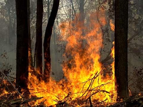 httpswww.outdoorlife.comsitesoutdoorlife.comfilesimport2014importImage2009photo1001307994wildfire1.jpg