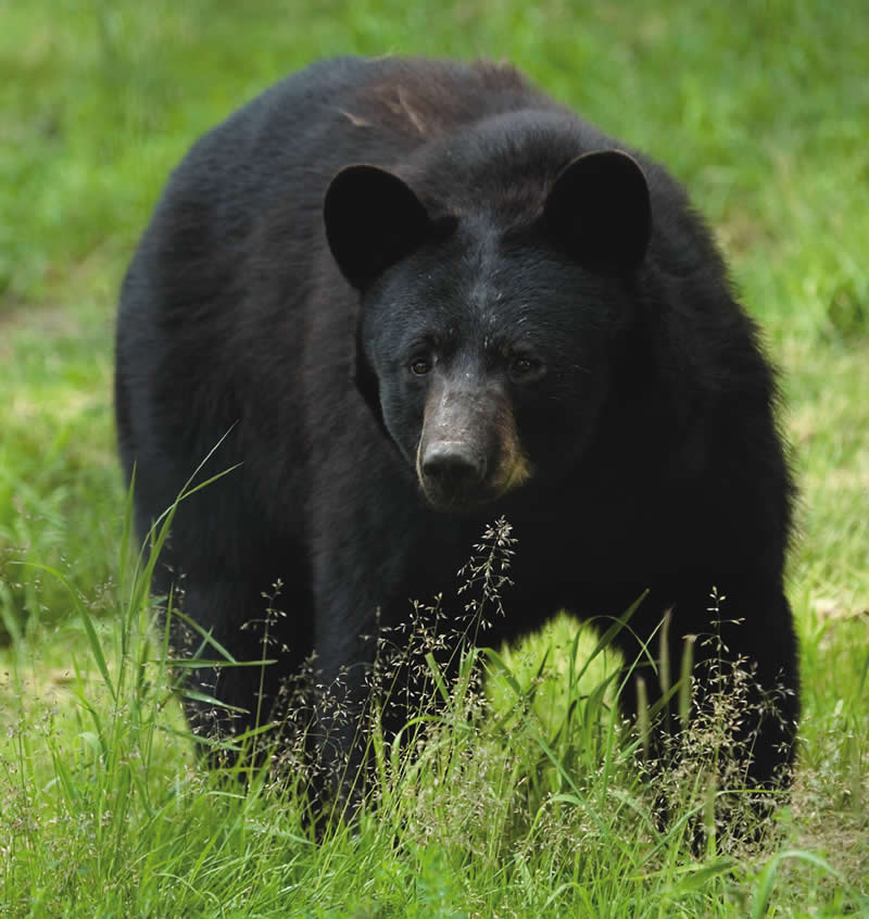 Black Bear Kills New Jersey Hiker