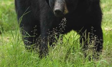 Black Bear Kills New Jersey Hiker