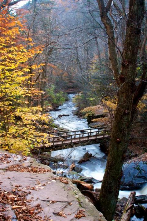 httpswww.outdoorlife.comsitesoutdoorlife.comfilesimport2014importImage2009photo7Decfoliage_2.jpg