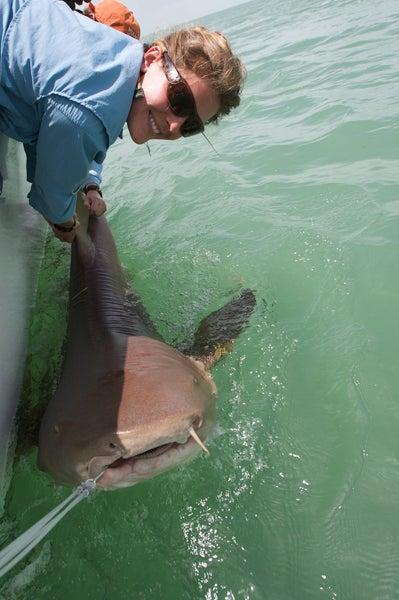 New Shark Science