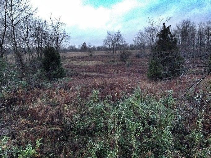 Whitetail Deer: The Bulletproof Rut Setup