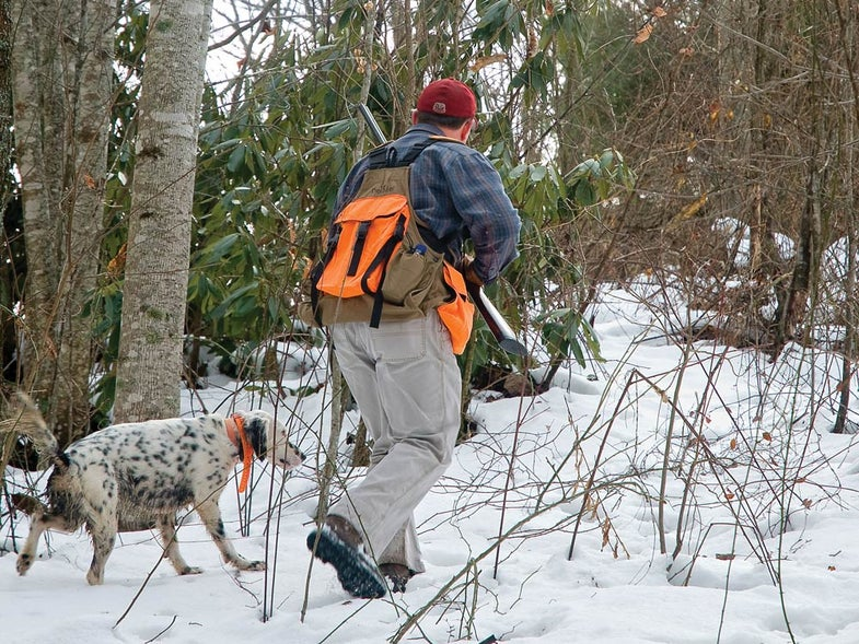 Late-season grouse hunting with an English setter.