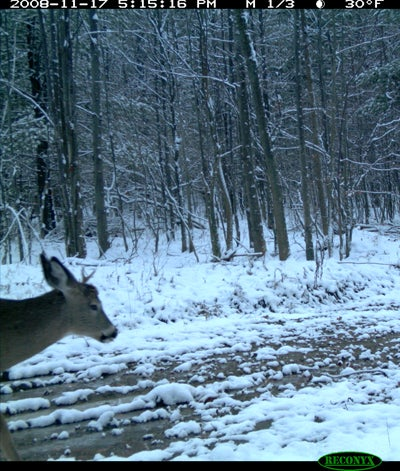httpswww.outdoorlife.comsitesoutdoorlife.comfilesimport2014importImage2008legacyoutdoorlife125-dec1_deer_forecast_3.JPG