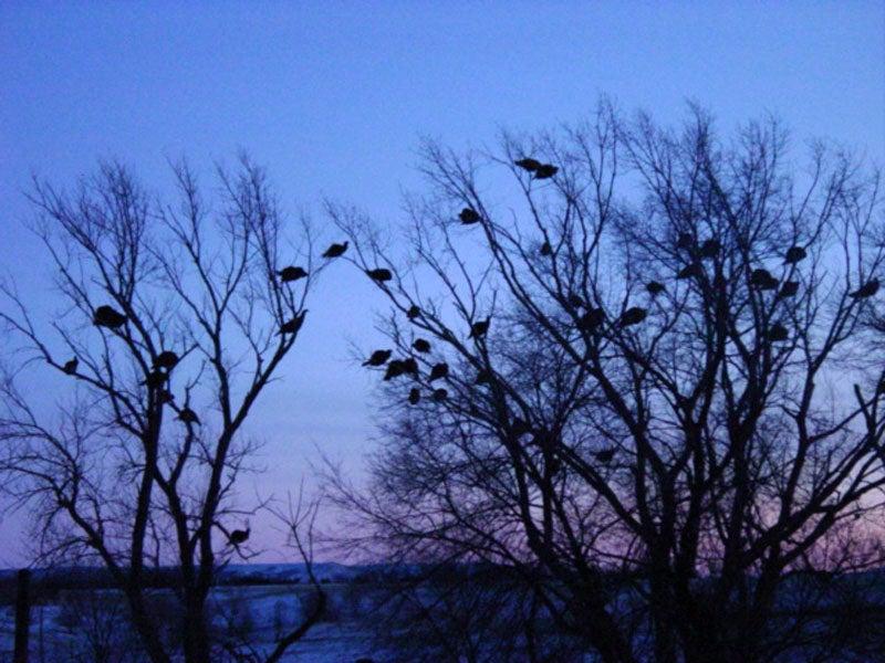 httpswww.outdoorlife.comsitesoutdoorlife.comfilesimport2013images2011032_39.jpg