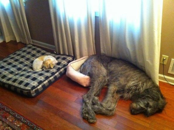 Contest: Write the Best Caption and Win Two Dog Training DVDs