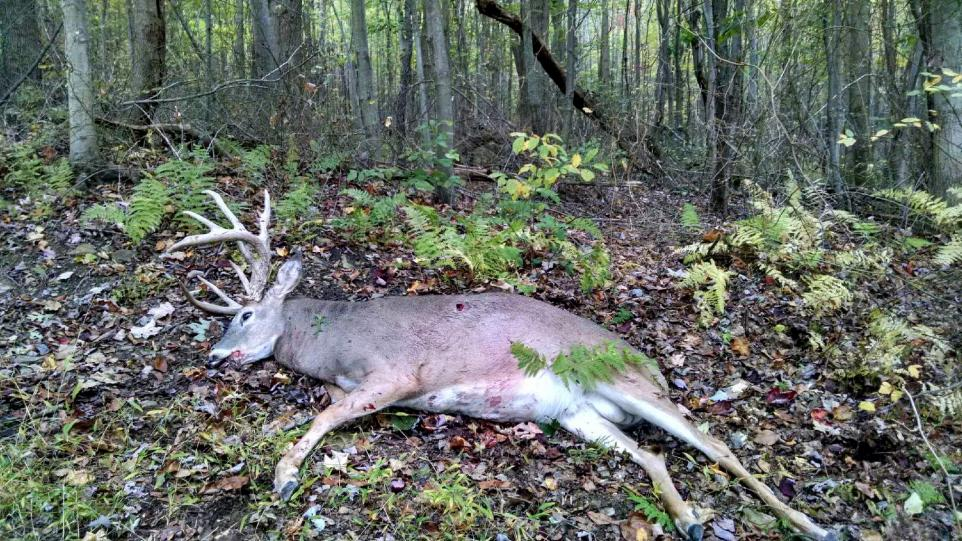 PA buck recovered
