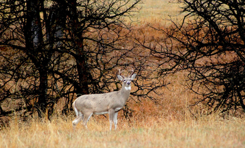 """Newsflash for Wildlife Biologists: It's Time to Quit """"Counting Deer"""""""