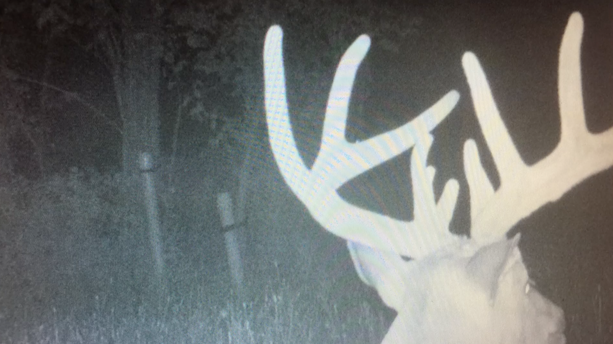 Why Not Going Hunting Could Be Your Best Early-Season Strategy