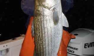 Why Greg Myerson is the World's Greatest Striped Bass Fisherman
