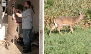 Deer Hunting: How-To Tips for Butchering and Processing Your Own Venison