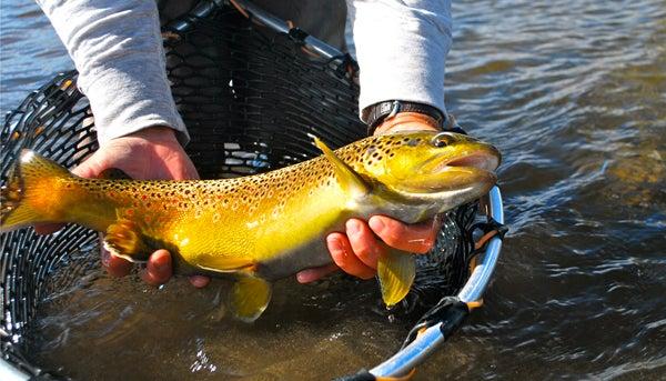 httpswww.outdoorlife.comsitesoutdoorlife.comfilesimport2013images201010slide43_1.jpg
