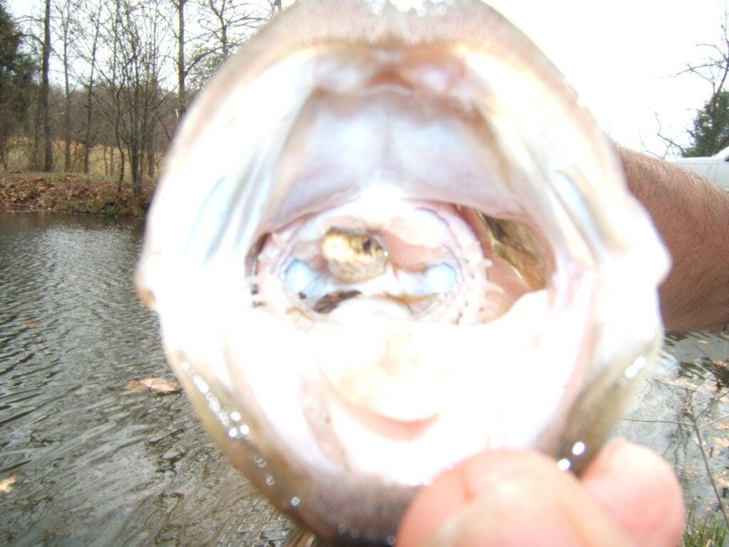 httpswww.outdoorlife.comsitesoutdoorlife.comfilesimport2014importImage2009photo3snakeinbass3.jpg