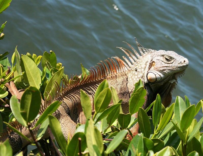 httpswww.outdoorlife.comsitesoutdoorlife.comfilesimport2014importImage2009photo312_1.jpg