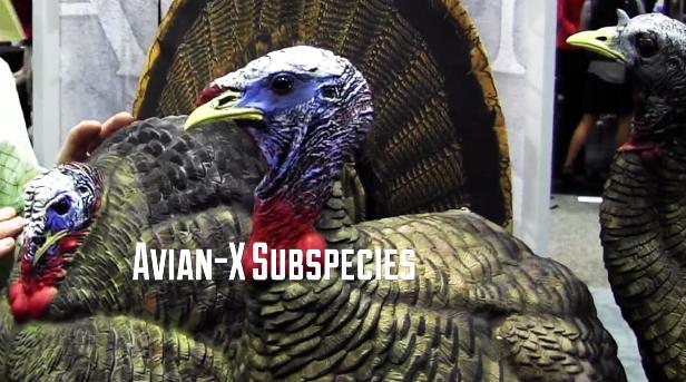 New Turkey Decoys for 2015: Avian-X Subspecies