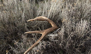 4 Shed Hunting Experts Told Us Their Strategy for Finding Antlers
