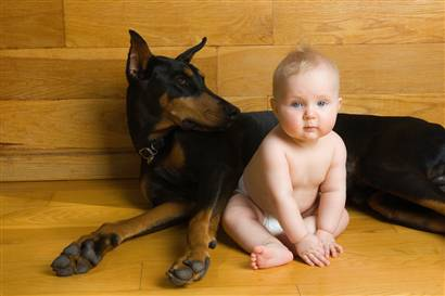 Is Your Dog Smarter Than Your Toddler?
