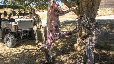 skinning a deer in the field