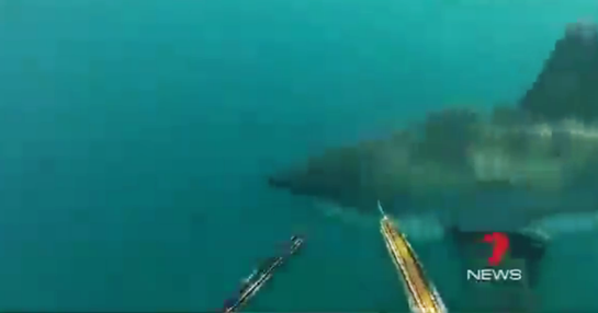 Two Spearfishermen Fend off Great White Shark