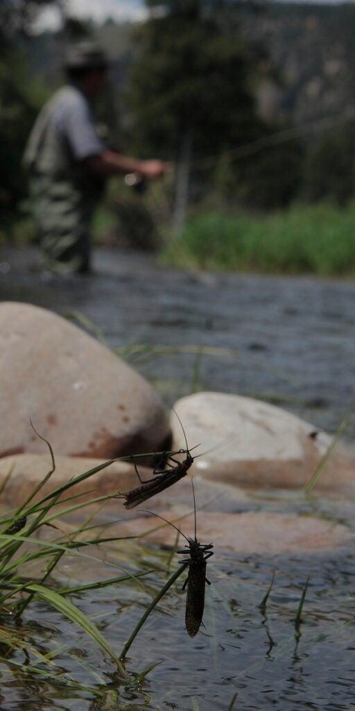 httpswww.outdoorlife.comsitesoutdoorlife.comfilesimport2014importImage2010photo30010OL0001.JPG