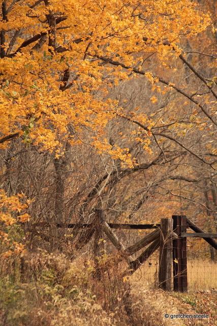 httpswww.outdoorlife.comsitesoutdoorlife.comfilesimport2014importImage2009photo7Decfoliage_53.jpg