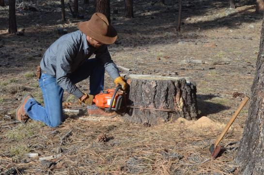 Fire Starting Tips: How To Collect Fatwood