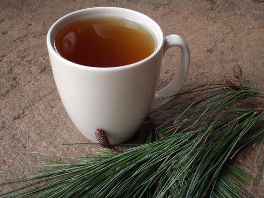 Survival Skills: 4 Wild Teas Every Survivalist Should Know