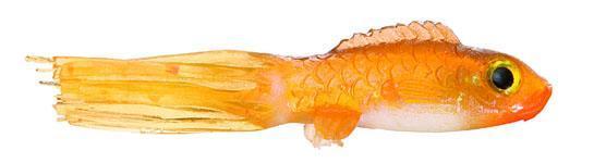 Northland Fishing Tackle slurpie goldfish panfish