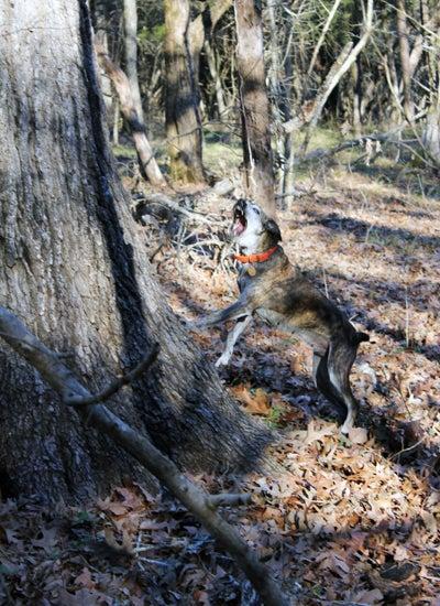 httpswww.outdoorlife.comsitesoutdoorlife.comfilesimport2013images20110212_Dixie_hates_squirrels_0.jpg