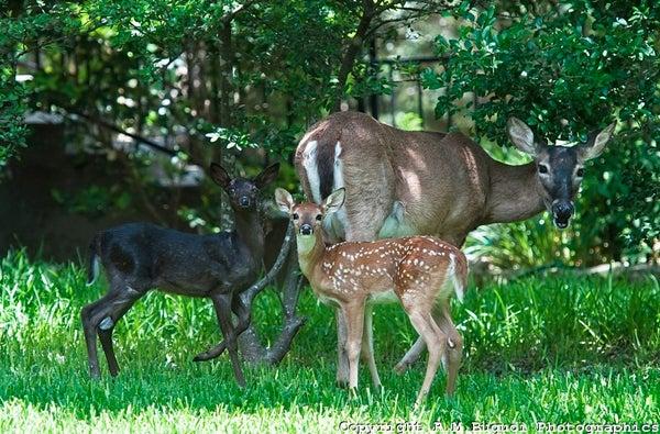 httpswww.outdoorlife.comsitesoutdoorlife.comfilesimport2014importImage2010photo10013215799_Screen_shot_2010-09-14_at_2.37.11_PM.jpg