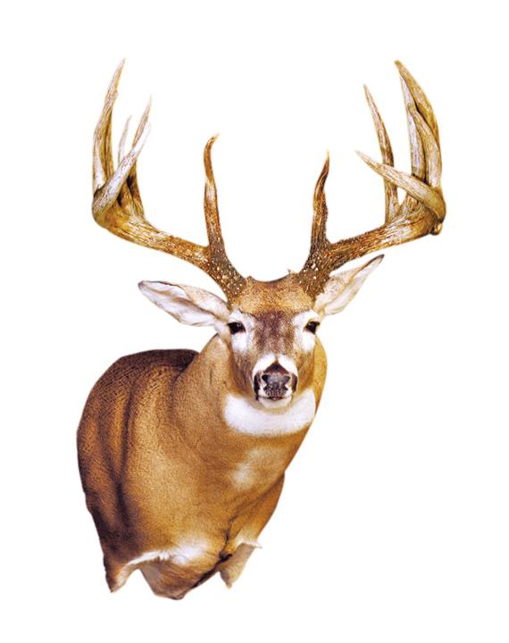 New World Record Whitetail? King Buck to be Rescored by Boone & Crockett Club