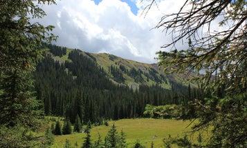 Photos: Backcountry Elk Hunt