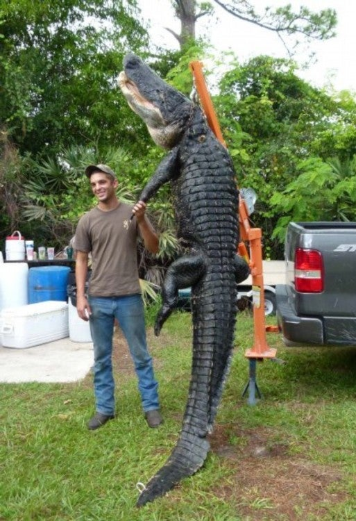 19-Year-Old Catches 800-Pound Alligator in Florida