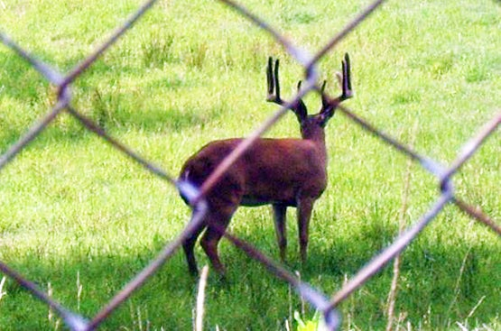 Indiana Attorney General Appeals Ruling on High-Fence Hunting