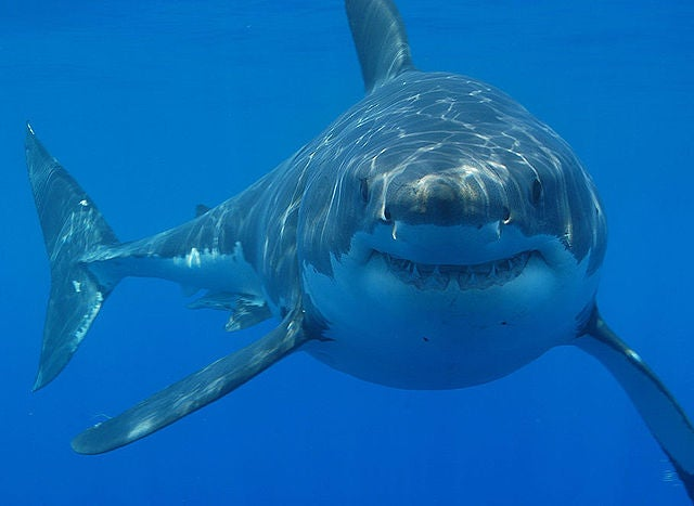 Survival Skills: How to Survive a Shark Attack