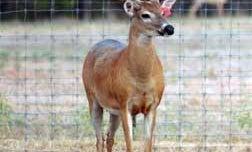 Missouri Governor Vetoes Bills to Restructure Captive Deer Management